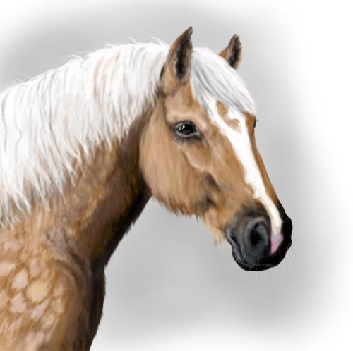 vuoden hevonen 2013